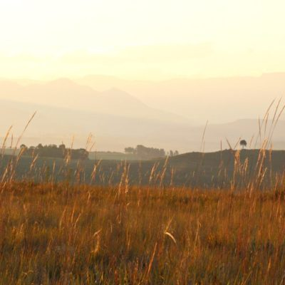 In The Underberg Fields of Gold